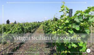 I grandi vitigni siciliani il Moscato di Siracusa - Cantine Gulino