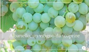 Albanello, tra i vitigni autoctoni siciliani da scoprire