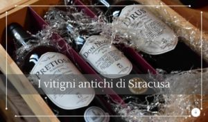 I vitigni antichi siciliani - Cantine Gulino