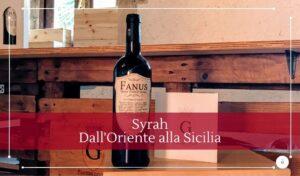 Orientale siciliano o francese storia e origini del Syrah - Cantine Gulino